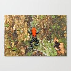 Poison Dart Frog - Amazon Canvas Print
