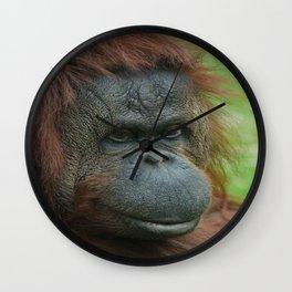 Female Orangutan Wall Clock