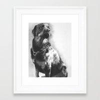 rottweiler Framed Art Prints featuring Rottweiler by onlypencil