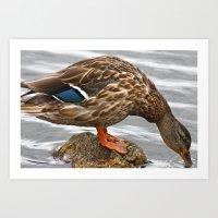 duck Art Prints featuring Duck by ArtByRobin