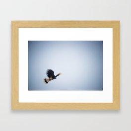 Rhinoceros Hornbill Framed Art Print
