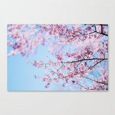 Sakura 06 Canvas Print