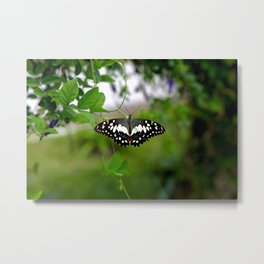 Butterfly Small Metal Print