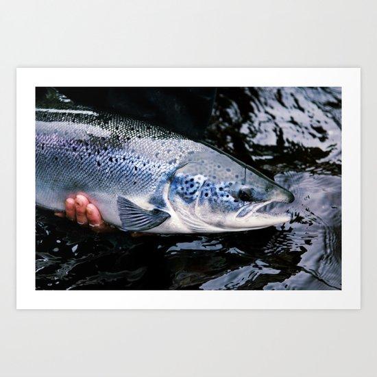 Atlantic Salmon Art Print