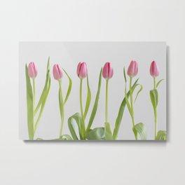 Rose tulips Metal Print