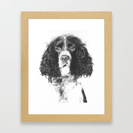 Springer Spaniel Framed Art Print