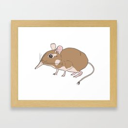 Elephant Shrew Framed Art Print