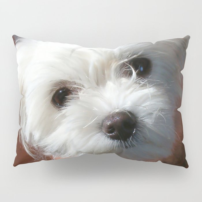 Cute Maltese asking for a treat Pillow Sham