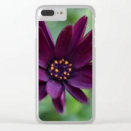 Purple Osteospermum Flower (Marco Close-Up) Clear iPhone Case