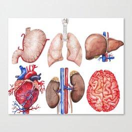 Watercolor organs Canvas Print