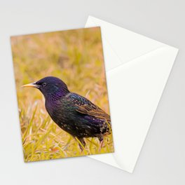Starling On Lime Grass Stationery Cards