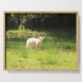 super cute white lamb Serving Tray
