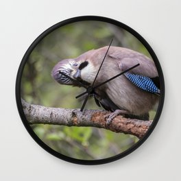 Curious beautiful Jay bird Wall Clock