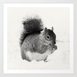 Squirrel Animal Photography Art Print