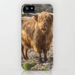 Massive ginger Scottish Highland cow iPhone Case