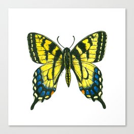 Tiger swallowtail butterfly watercolor and ink art, watercolor butterfly, eastern tiger swallowtail Canvas Print