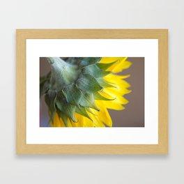 Ray, A drop of golden sun Framed Art Print