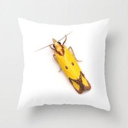 Sulphur Knapweed Moth (Agapeta zoegana) Throw Pillow