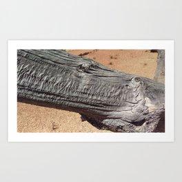 Bryce Canyon Bristlecone Pine Art Print