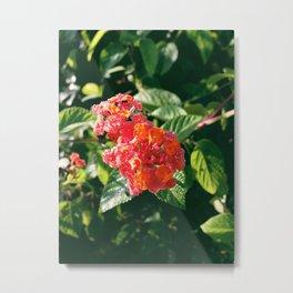 Ruby Lantana Camara Metal Print