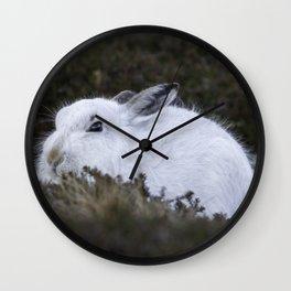 Close to wild mountain rabbit Wall Clock