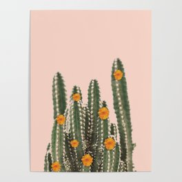 Cactus & Flowers Poster