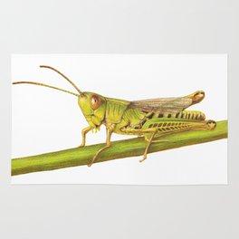 Grasshopper by Lars Furtwaengler | Colored Pencil / Pastel Pencil | 2014 Rug