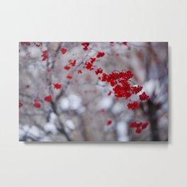 Winter's Red Metal Print