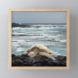 Hawaiian Honu - Sea Turtle Framed Mini Art Print