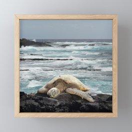Hawaiian Honu - Sea Turtle Framed Mini Art Print