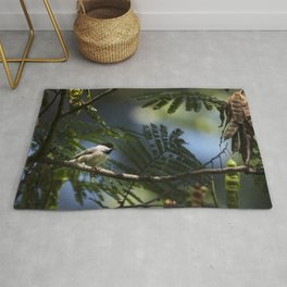 Roosting Black Capped Chickadee Rug
