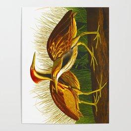 American Bittern Audubon Birds Vintage Scientific Hand Drawn Illustration Poster
