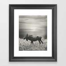 Moose Walk  Framed Art Print