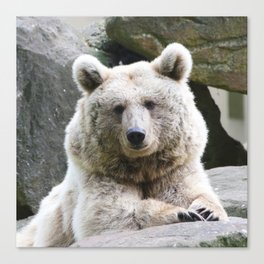 Bear_20180801_by_JAMFoto Canvas Print