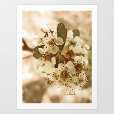 white blossoms on a tree. Art Print