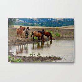 Mustangs at Watering Hole Metal Print