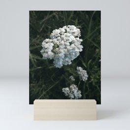 Little white flower close up photograph Mini Art Print