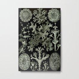Naturalist Lichen Metal Print