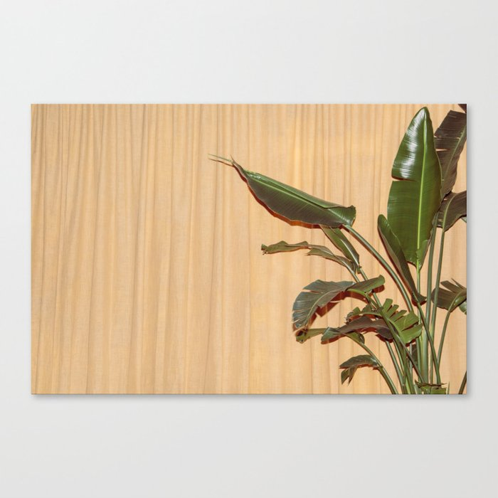 Curtain and Plant Canvas Print