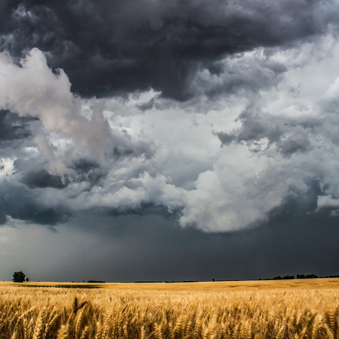 Cotton Candy - Storm Clouds Over Wheat Field in Kansas Comforters