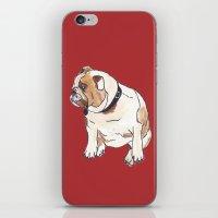 english bulldog iPhone & iPod Skins featuring English Bulldog by Tammy Kushnir