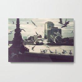 Pigeon Whisper    Metal Print