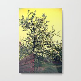 Yellow sky and flower of the almond tree Metal Print