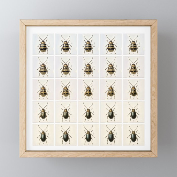 Confusing Coleopterists Framed Mini Art Print