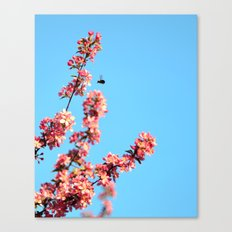 Pink flowers With Bee Canvas Print