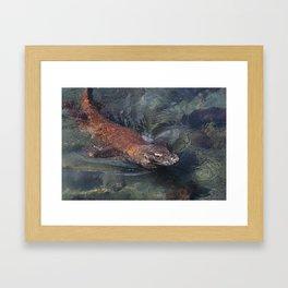 Swimming komodo dragon Framed Art Print