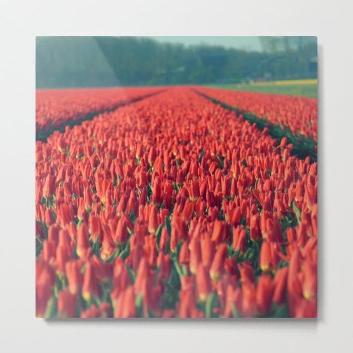 Tulips field #8 Metal Print