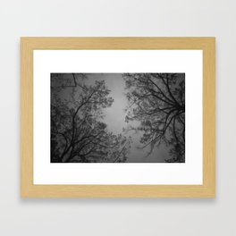 The Birds Are Spies, They Report to the Trees Framed Art Print