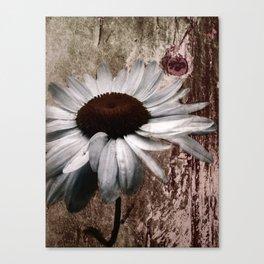 Daisy... Canvas Print