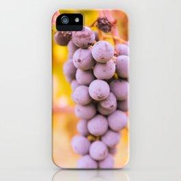 In vineyard iPhone Case